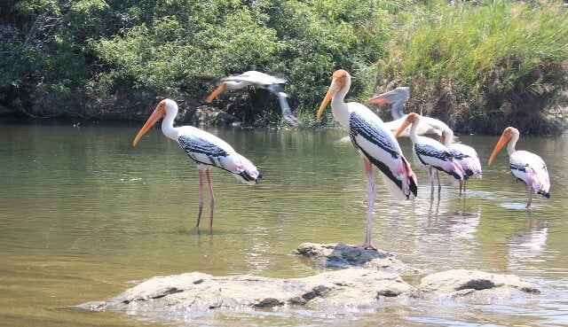 Ranganatittu Birds Sanctuary Mysore