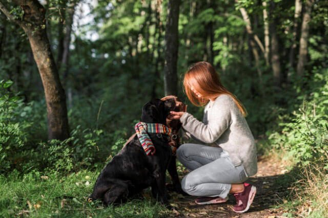 Tips to Calm your Dog Down with the Fireworks this Canada Day